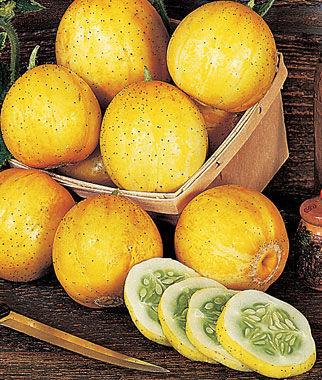 Lemon Cucumber Seeds and Plants, Vegetable Gardening at ...
