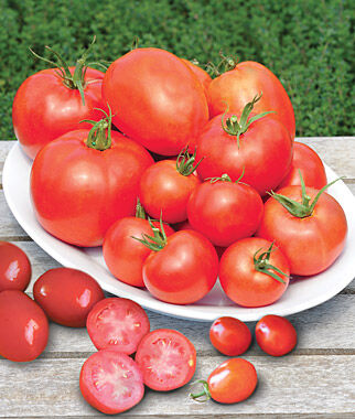 Tomato, Collection, Burpee's Sampler 6 Plants Tomatoes, Tomato Seeds, Beefsteak Tomatoes, Slicing Tomatoes, Tomato Starts, Tomato Plants