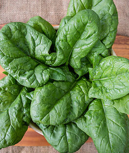 Spinach, Persius Hybrid, , large