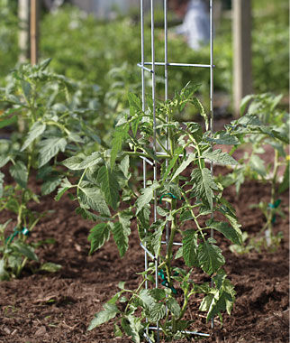 Tomato Towers, , large
