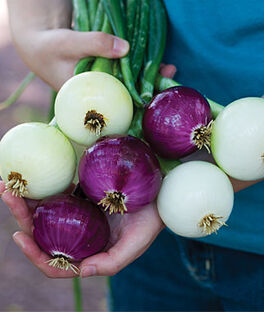 Onion, Intermediate Day Collection, , large