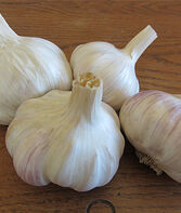 Garlic, Cuban Purple, , large