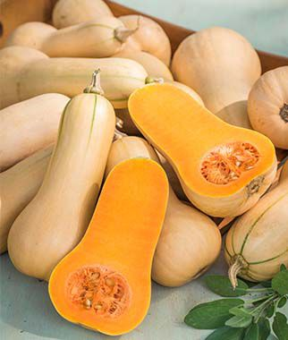 Squash, Winter, Burpee's Butterbush, , large