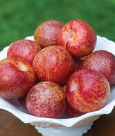 Pluot, Flavor Supreme PP6763, , large