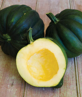 Squash, Winter, Early Acorn Hybrid, , large