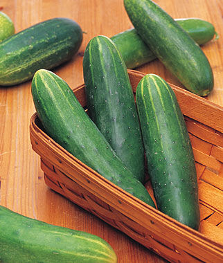 Cucumber, Double Yield Organic, , large