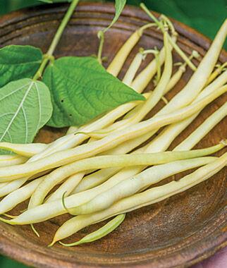 Bean, Monte Gusto 1 Pkt. (200 seeds) Bean Seeds, Pole Beans, Bean - Pole, Vegetable Seeds, Garden Seeds, Seeds, Garden Supplies