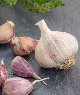 Garlic, Purple Glazer 1/2 lb Garlic, Garlic Sets, Garlic Plants, Garlic bulbs, Garden Supplies, Vegetable Garden