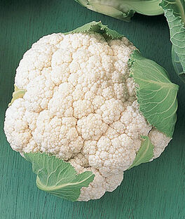 Cauliflower, Early White Hybrid, , large