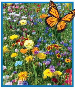 Burpee's Bee and Butterfly Mix, , large