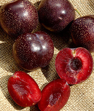 Plum, Japanese Burgundy, , large