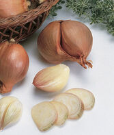 Shallots, Dutch Yellow, , large