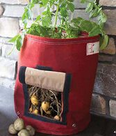 Potato Planter, , large
