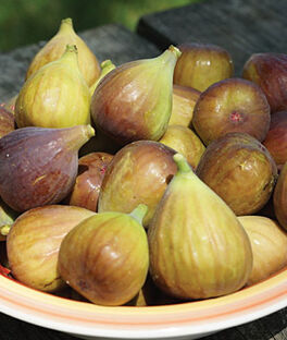Fig, Letizia, , large