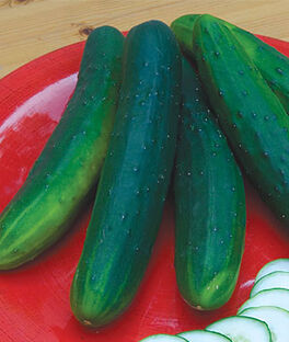 Cucumber, Garden Sweet Burpless Organic, , large