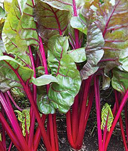 Swiss Chard, Red Magic Hybrid, , large