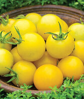 Tomato, Honey Delight Hybrid, , large