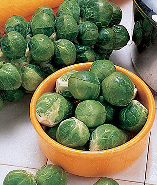 Brussels Sprouts, Tasty Nuggets Hybrid, , large