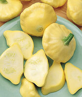 Squash, Summer, Sunny Delight Hybrid (Scallop), , large