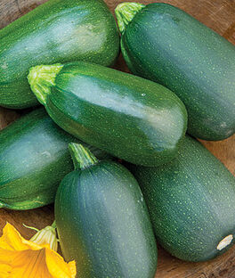 Squash, Summer, Green Eggs Hybrid, , large