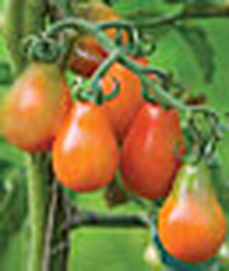 Tomato, Red Pear Organic, , large