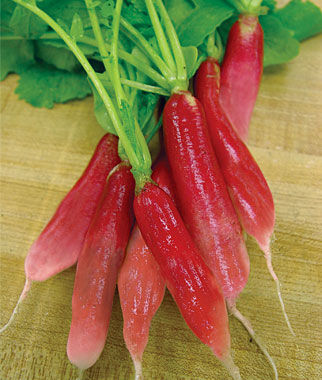 Radish, China Rose, , large