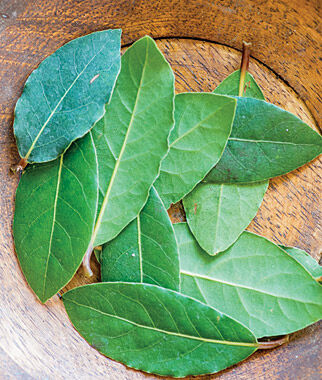 Bay Laurel, , large
