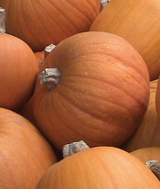 Pumpkin, Small Sugar Organic, , large