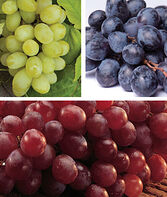 Seedless Grape Collection, , large