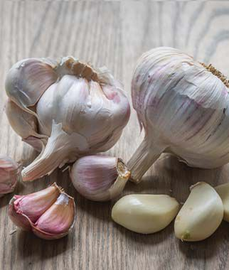 Garlic, Maiskij, , large