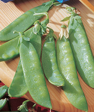 Pea, Mammoth Melting Sweet Pod Organic, , large