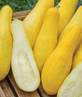 Squash, Summer, Early Prolific Straightneck, , large