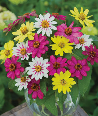 perfect annual flowers for cutting  burpee, Beautiful flower