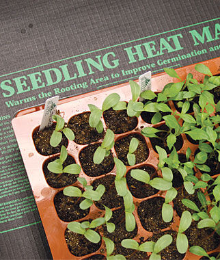 Seedlings Heat Mat Seed Starting Supplies And Garden Tools At Burpee Com