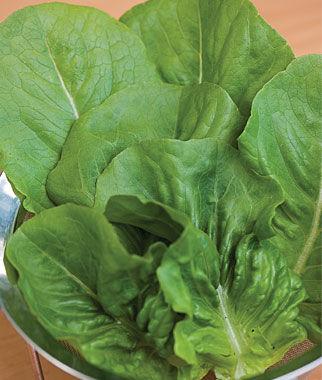 Lettuce, Little Caesar 1 Pkt. (700 seeds) Lettuce Seed, Lettuce Seeds, Salad Greens, Lettuce, Lettuce Mix, Mesclun, Garden Seeds, Salad Seeds
