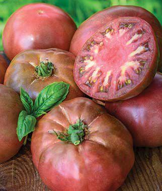 Tomato, Black Krim 1 Pkt. (50 seeds), Tomatoes, Tomato Seeds, Beefsteak Tomatoes, Slicing Tomatoes, Tomato Starts, Tomato Plants