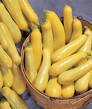 Squash, Summer, Saffron , , large