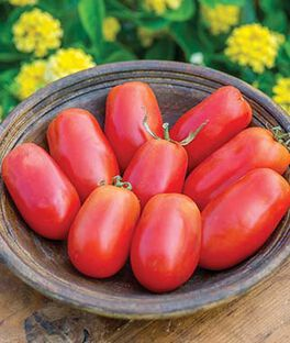 Tomato, Patio Paste Hybrid, , large