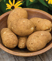 Potato, Rio Grande Russet, , large