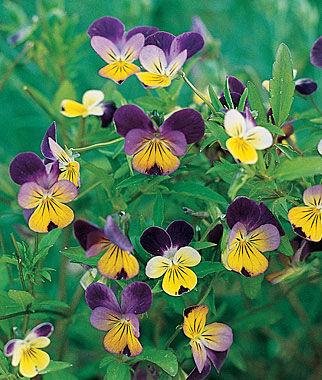 all flowers, Beautiful flower