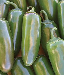 Pepper, Hot, Jalapeno Gigante, , large