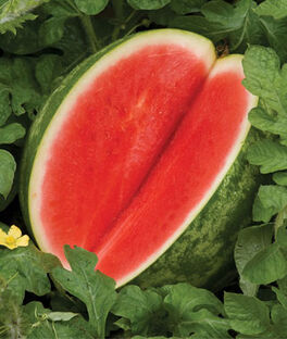 Watermelon, Red Ruby Hybrid, , large
