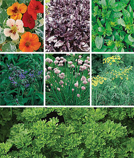 Collection, Summers Essential Herbs , , large