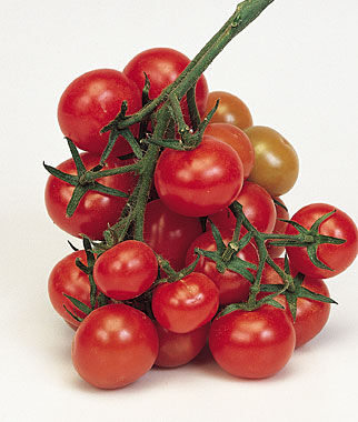 Tomato, Christmas Grapes, , large