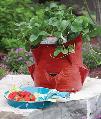 Strawberry Planter, , large
