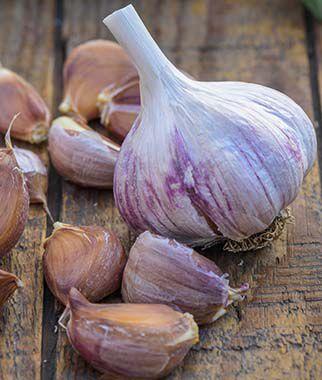 Garlic, Spanish Roja 1/2 lb. Garlic, Garlic Sets, Garlic Plants, Garlic bulbs, Garden Supplies, Vegetable Garden