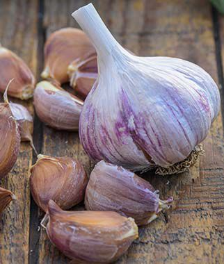 Garlic, Spanish Roja, , large