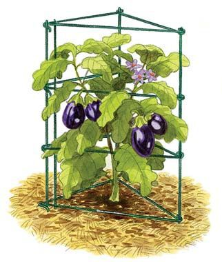 Pro Series Pepper/Eggplant Support, , large