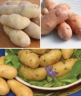 Potato, Fingerling Collection, , large