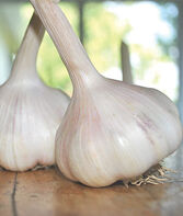 Garlic, California Early, , large
